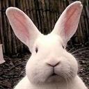 穿过狮门的兔子(2741150)