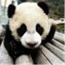 熊猫丙(100167)