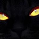cat31(109685)