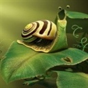 蜗牛(1543714)