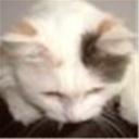 猫虫虫(100178)