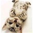 catman111849(111849)