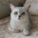 孤独的猫(101931)