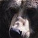 皮皮熊112257(112257)