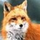 FoxWu(104325)