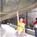 小琵琶(102634)
