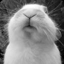 O2月小兔(116720)