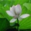 ericwang104837(104837)