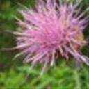 花儿102843(102843)
