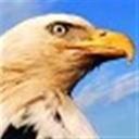 老鹰106845(106845)