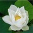小林如水(116891)
