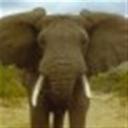 大象104980(104980)