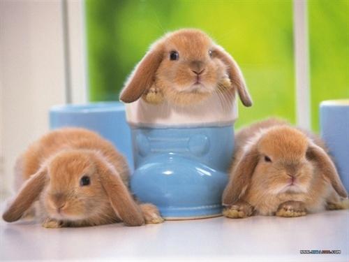 可以生这么多小兔吗