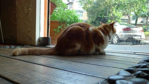 总觉得猫的背影~好像深思着什么