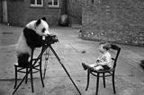 动物摄影师
