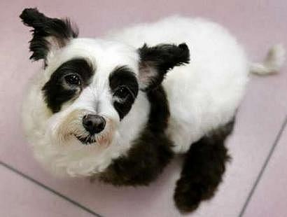 标签: 旅游景点 风景区  熊猫像共多少人浏览:2566846  电话: 评论数