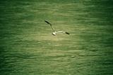 鸟与梦飞行2