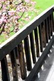 [原]3月的植物园