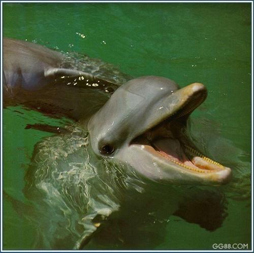 你能看到几只海豚