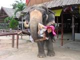 吉祥的大象