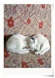 老白与黑皮写真5