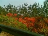 2006秋京石高速旁2
