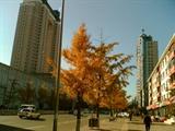 2006秋锦州解放大街1