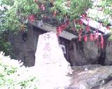 宋城-许愿树