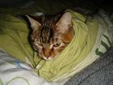 塔利班的猫