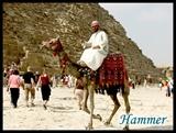 在吉萨的金字塔群前,当地人以骑骆驼招徕游客