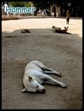 孟菲斯博物馆外的几条狗狗