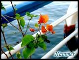 在漂移尼罗河的船上,不知为什么,这株普通的植物让我不停地围着它拍来拍去01