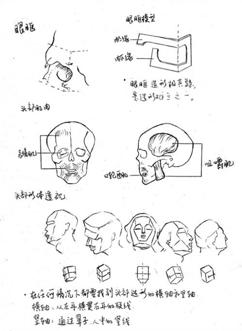 人体头部结构分析01