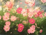 彩色铅笔画的花花