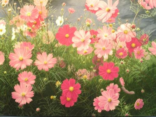 彩色铅笔画的花花 – mtime时光网