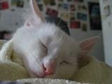 佶佶睡得好甜